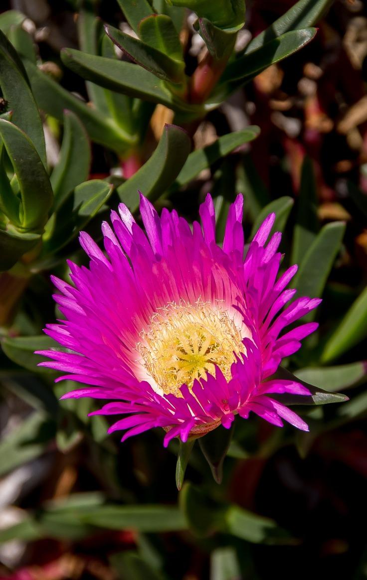 flower-1765961_1920