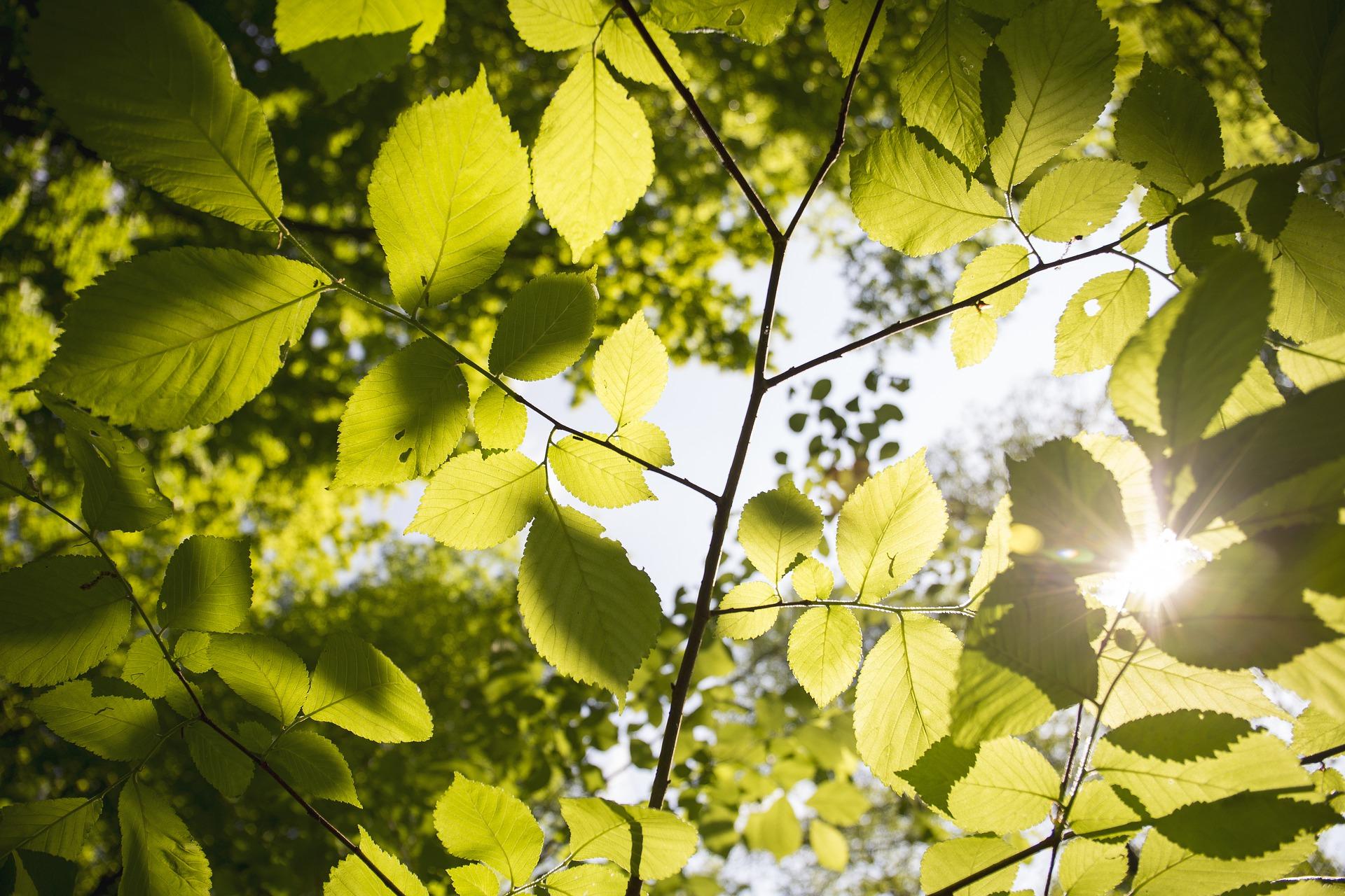 leaves-3089991_1920